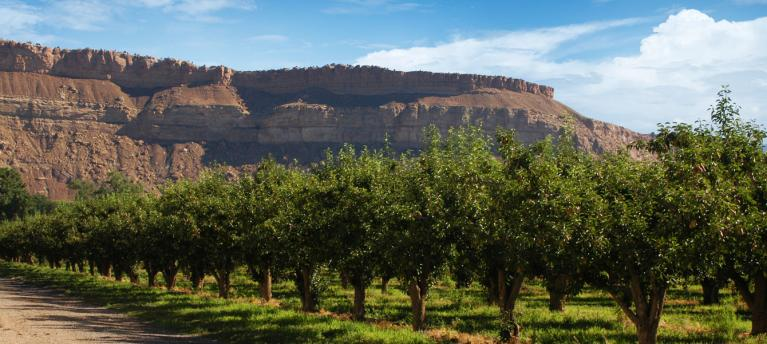 Orchards of Palisade